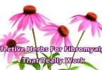 Effective Herbs For Fibromyalgia That Really Work