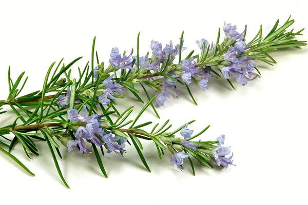 Best Herbs for Autoimmune Disease